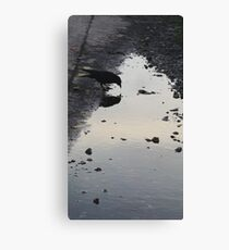 Crow Reflections Canvas Print