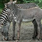 Multi Stripes by John  Kapusta