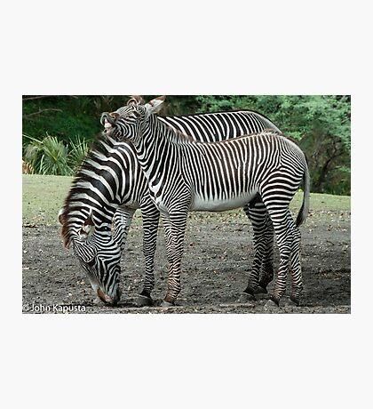 Multi Stripes Photographic Print