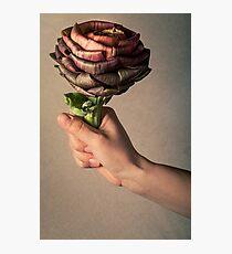 Artichoke flower like a rose Photographic Print