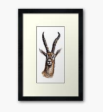 Wire Gazelle (Colour) Framed Print