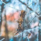 Frozen Leaf and Tree Branches by Milan Surbatovic