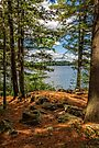 A secluded spot by PhotosByHealy
