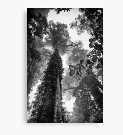 Look up - and up and up! Canvas Print