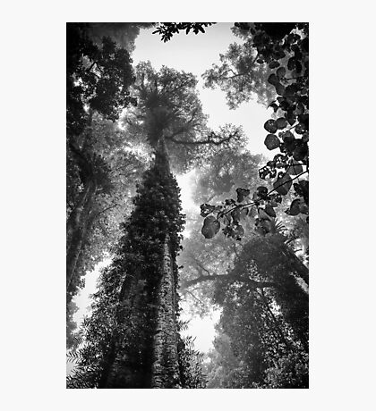 Look up - and up and up! Photographic Print