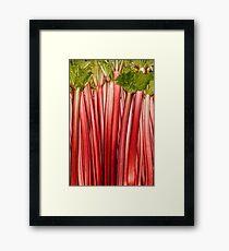 Rhubarb full rose red background. Rheum. Macro Framed Print