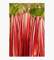 Rhubarb full rose red background. Rheum. Macro Photographic Print