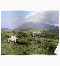 Wild Grazing on the Isle of Arran Poster