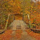 Autumn Orange Colors by Deborah  Benoit
