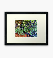 Irises by Van Gogh  Framed Print