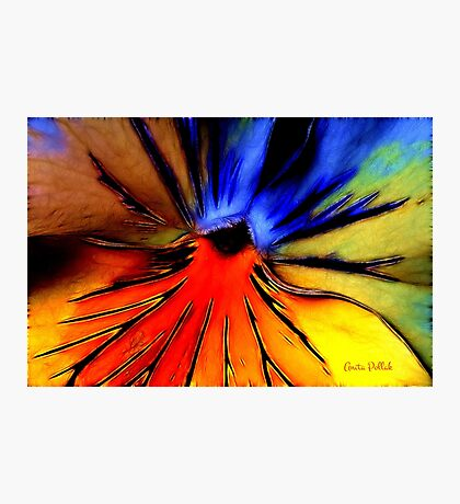 Far Out Pansy Photographic Print