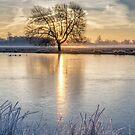 Winter in Bushy park by Stephen Liptrot