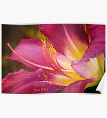 Painted Daylily Poster