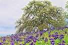 Lupines and Oak by John Butler