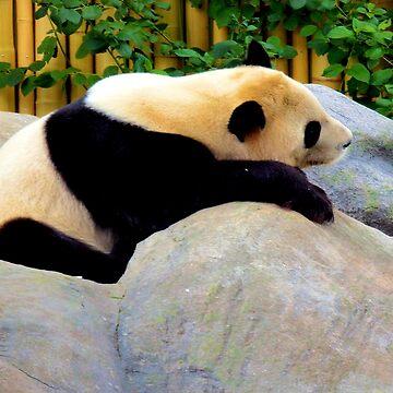 Lazy Panda by NicoleK-design