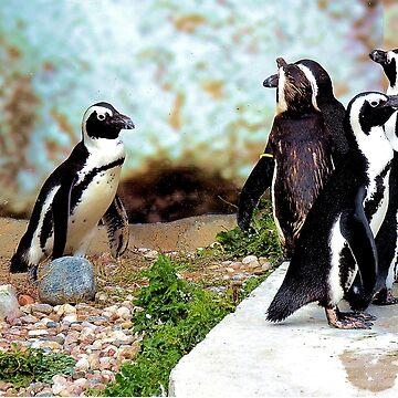 Penguin gathering by NicoleK-design