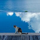 Cat on Blue in Antigua by Christine  Wilson