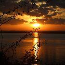 Amber Sunset by Bob Hardy
