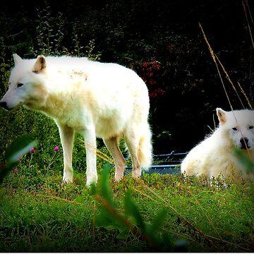 White Wolves by NicoleK-design