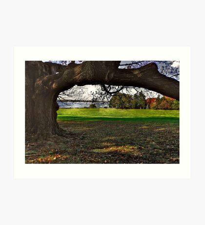 Branching a View Art Print