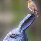 Robin on White Rabbit by Richard Ion