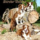 Border Collies by AndreaEL