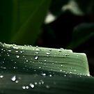 Monsoon incentive by Hélène David-Cuny