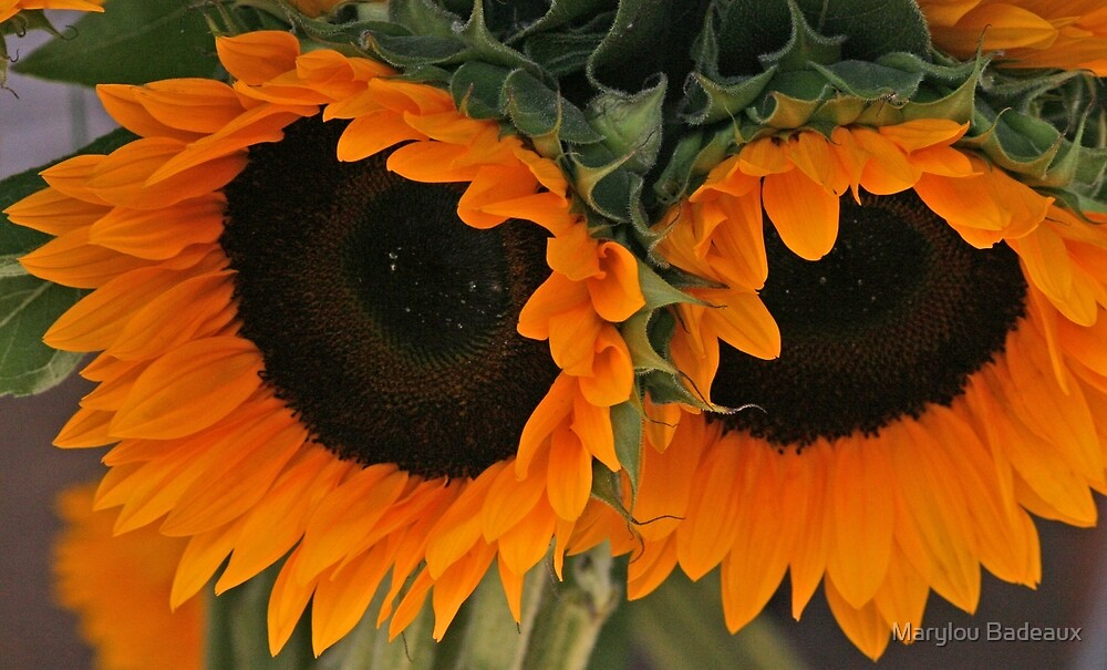 Sunny Sunflowers by Marylou Badeaux