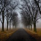 Foggy Morning by (Tallow) Dave  Van de Laar