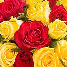 Red and yellow roses background by Maryna Gumenyuk