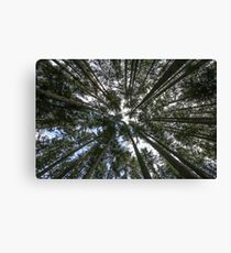 Trees So Tall Spin Around and Fall Canvas Print