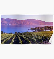 Okanagan Vineyard  Poster