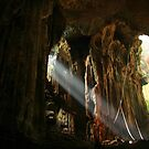 Gomantong Caves by David McGilchrist