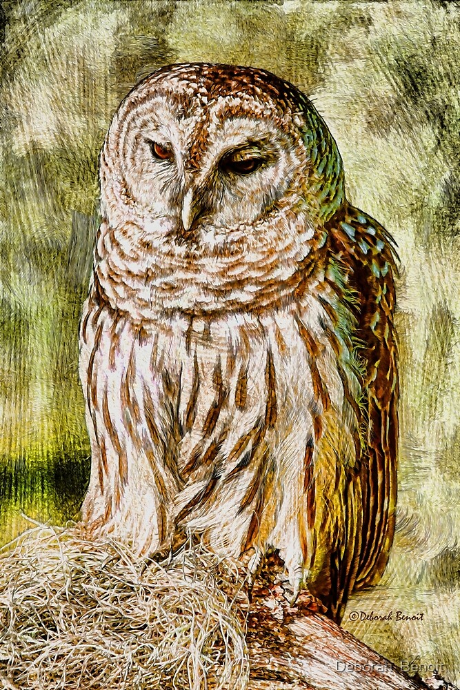Barred Owl by Deborah  Benoit