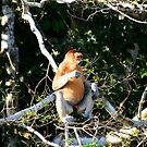 Proboscis Monkey by David McGilchrist