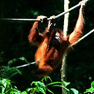 Monkeying around by David McGilchrist
