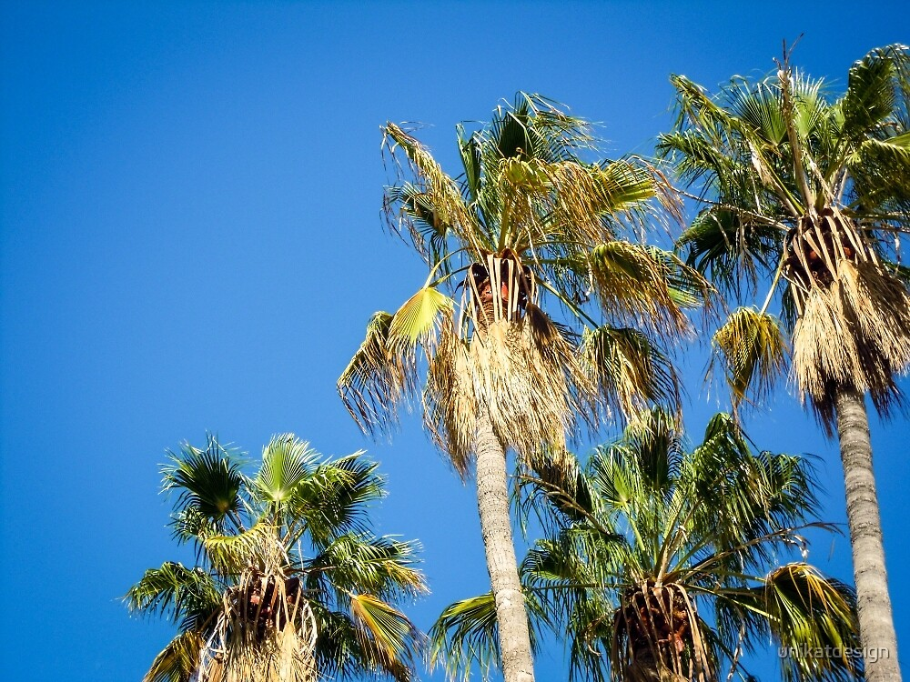 Palm trees by unikatdesign