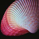 www.lizgarnett.com - uk62932 - pink shell by Liz Garnett