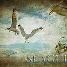 Seagull by zzsuzsa