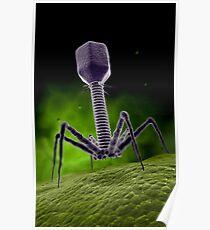 Mikroskopische Ansicht von Bakteriophagen. Poster