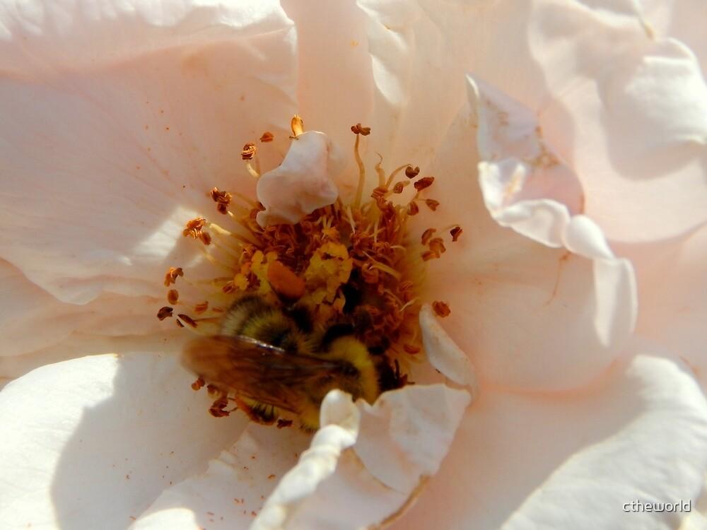 Rose Garden Series ~ 4 by ctheworld