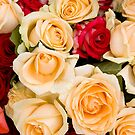 Colorful roses background by Maryna Gumenyuk
