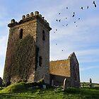 Birds in flight, Templar's Church,Templetown, Wexford, Ireland by David Carton