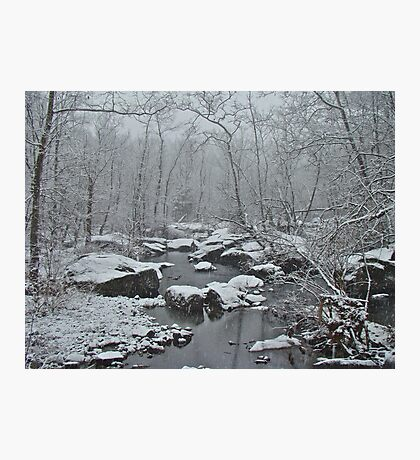 Dressed in White For Winter's First Snow Photographic Print