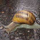 Snail by rasim1