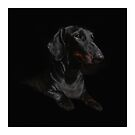 BLACK DACHSHUND ON BLACK by Val Goretsky