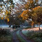 one frosty morning in New Forest by Kerto Elvin
