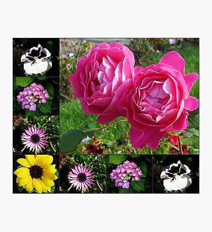 Floral Collage featuring Two Pink Roses Photographic Print