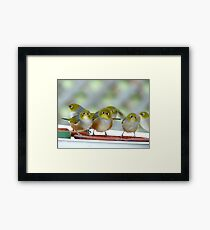 Excuse Me Waiter... But...Where Is The Main Course? - Silver-Eyes - NZ Framed Print