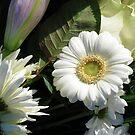 Blumenkonversation von BlueMoonRose